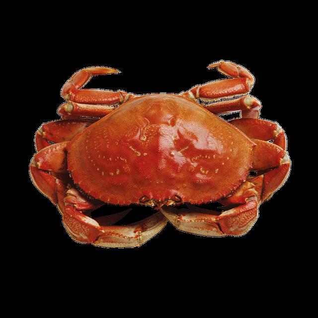 Free photo: Crab, Marine, Seafood - Free Image on Pixabay ...