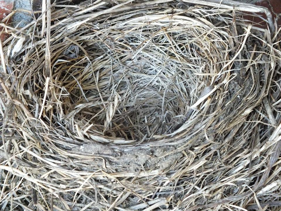 ein leerer Nester werden