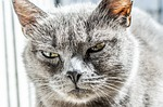 cat, angry, unhappy