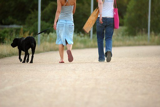 Dog, Walking, Woman, Pet, Walk, Women