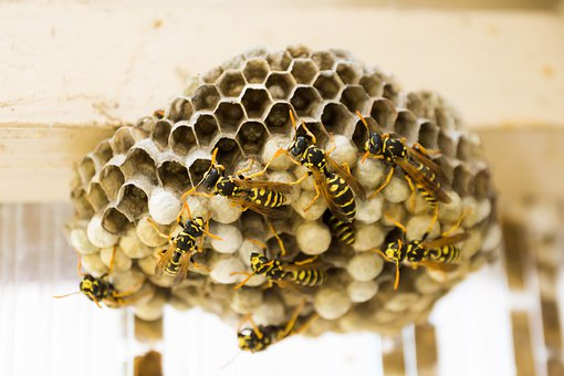 The Hive, Wasps, Combs, Nest, Insect