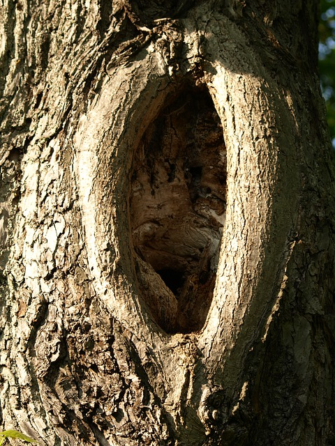 Free Photo Knothole Log Gnarled Tree Bark Free Image