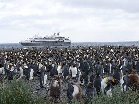 Antarctica, Southern Ocean, King Penguin