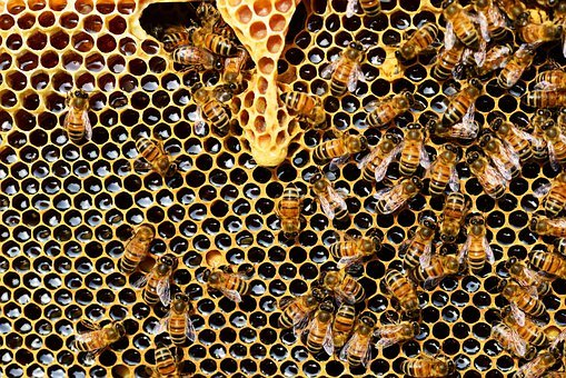 Beehive, Bees, Honeycomb, Honey Bee