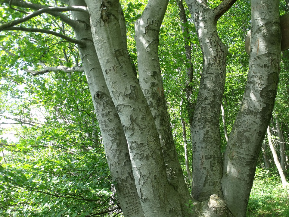 Foto gratis: Batang Pohon, Pohon, Tanaman - Gambar gratis ...