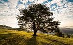 drzewo, wschód, natura