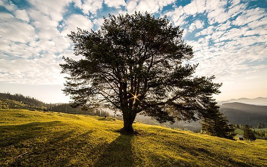 Tree, Dawn, Nature, Bucovina, Romania
