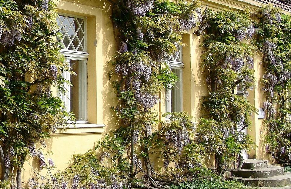 Potsdam Hauswand Gestaltung · Kostenloses Foto auf Pixabay