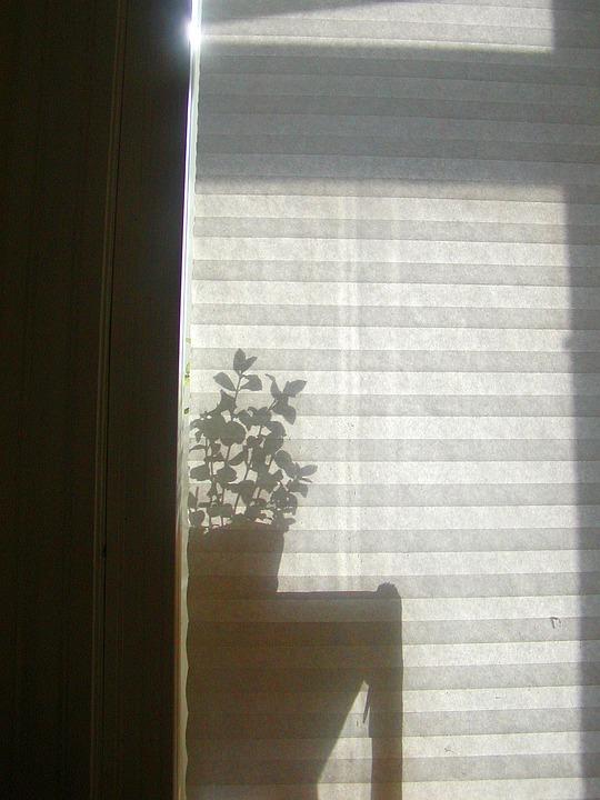 Window Blind Shadow Free Photo On Pixabay