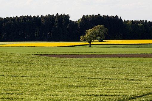 Oilseed Rape, Agricultural Operation