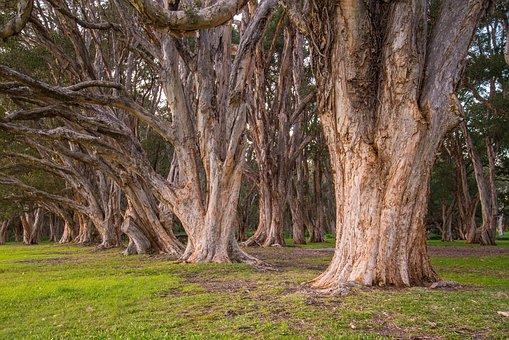 Trees, Park, Botanical, Foliage, Natural