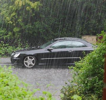 Pluie, Voiture, Les Plantes