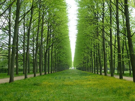 Trees, Avenue, Perfect, Green, Spring