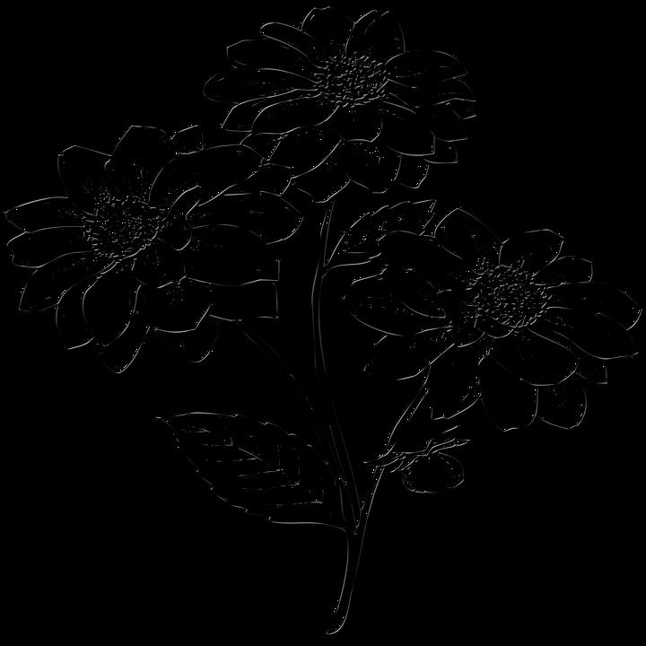 Flowers Daun Anggrek Hitam
