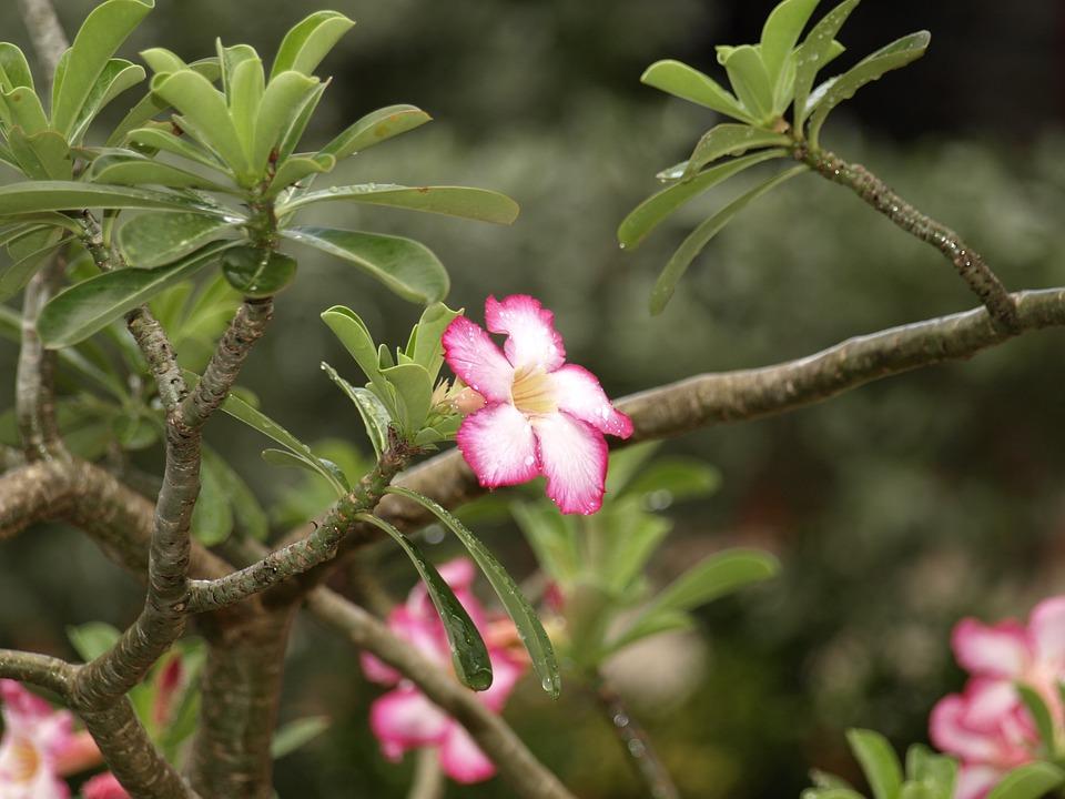 Fleur Tropiques Apres Photo Gratuite Sur Pixabay