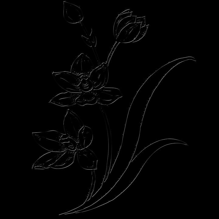Ide+ Jenis Gambar Ilustrasi Bunga Terbaik