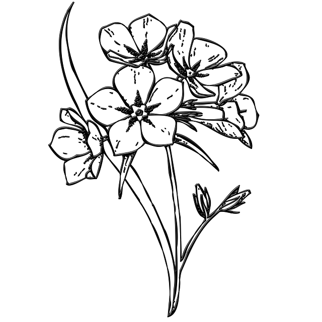 Flower Black And White Transparent Png Pictures: Free Illustration: Flowers, Bunch, Buds, Floral