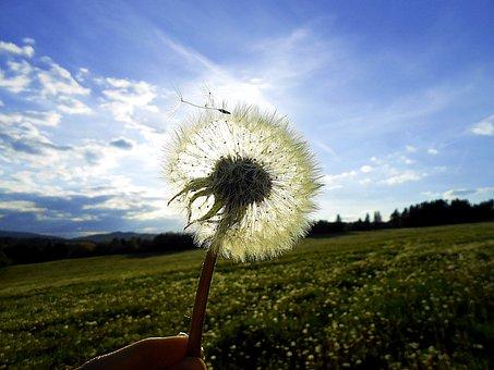 Dandelion, Sun, Glow, Meadow, Light