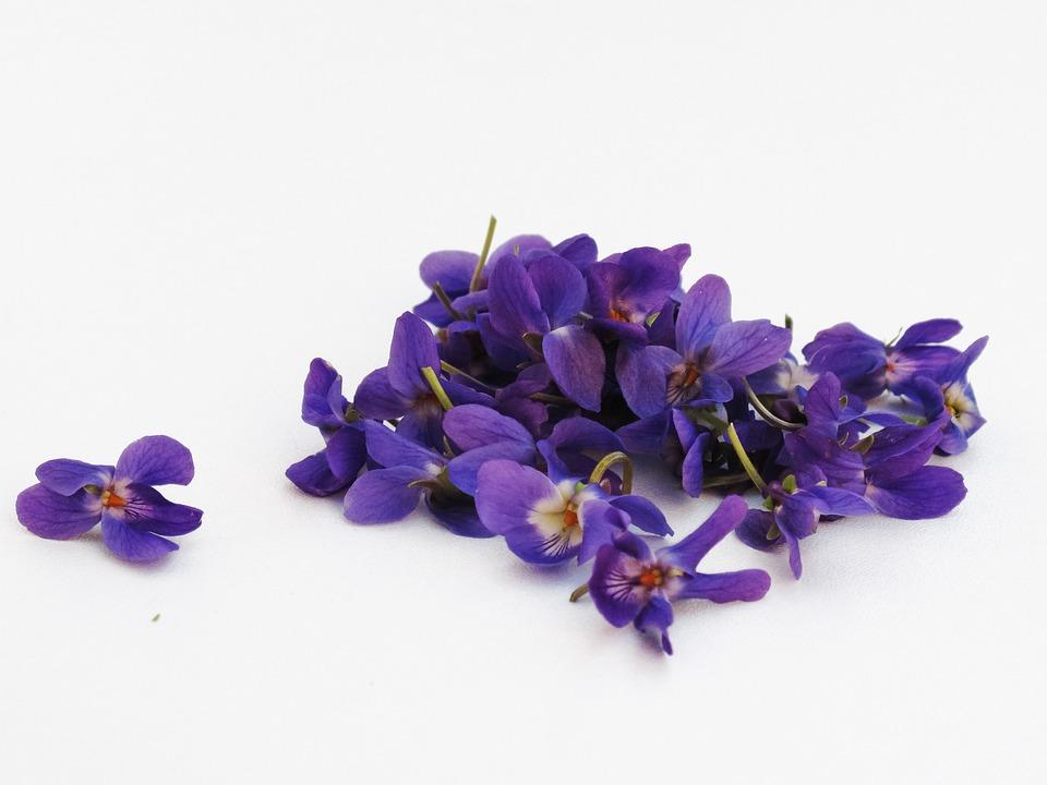 Photo gratuite violettes fleurs violet violette image gratuite sur pixabay 341682 - Image fleur violette gratuite ...