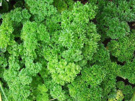 Parsley, Herb, Spice, Parsley, Parsley