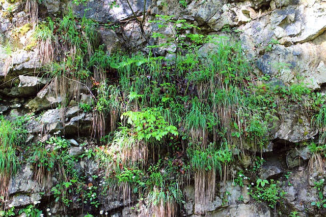 Plant Rock Wall Overgrown 183 Free Photo On Pixabay