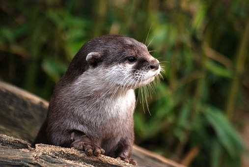 Head, Details, Otter, Close-Up, Whiskers