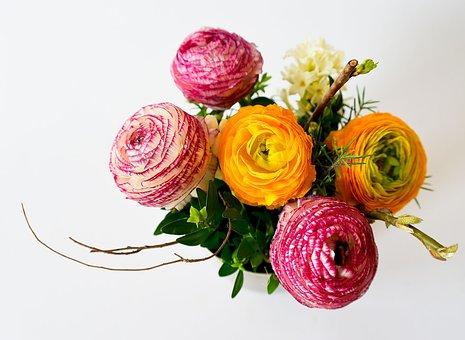 Fleurs, Plantes, Fleur, Couleur, Orange