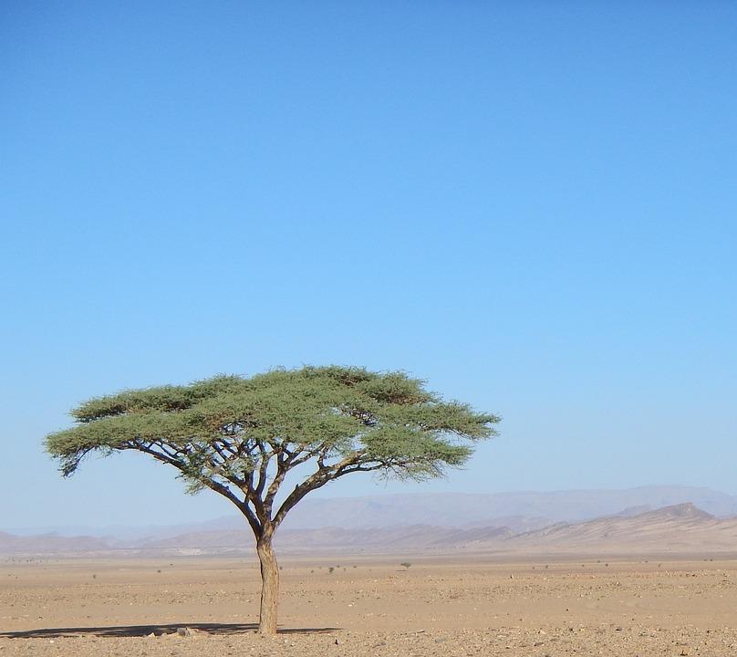 vertical tree