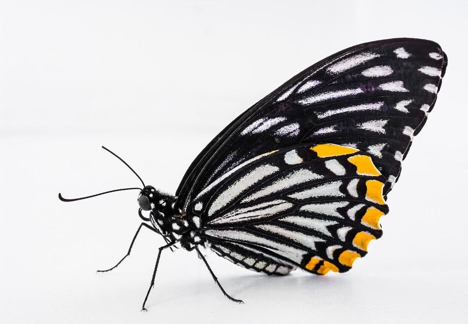 Butterfly Coffee