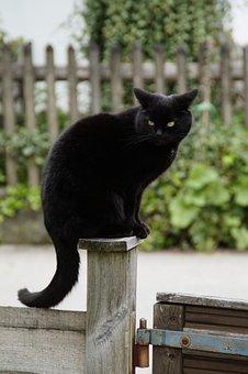 Katze, Schwarz, Schwarze Katze, Bewachen