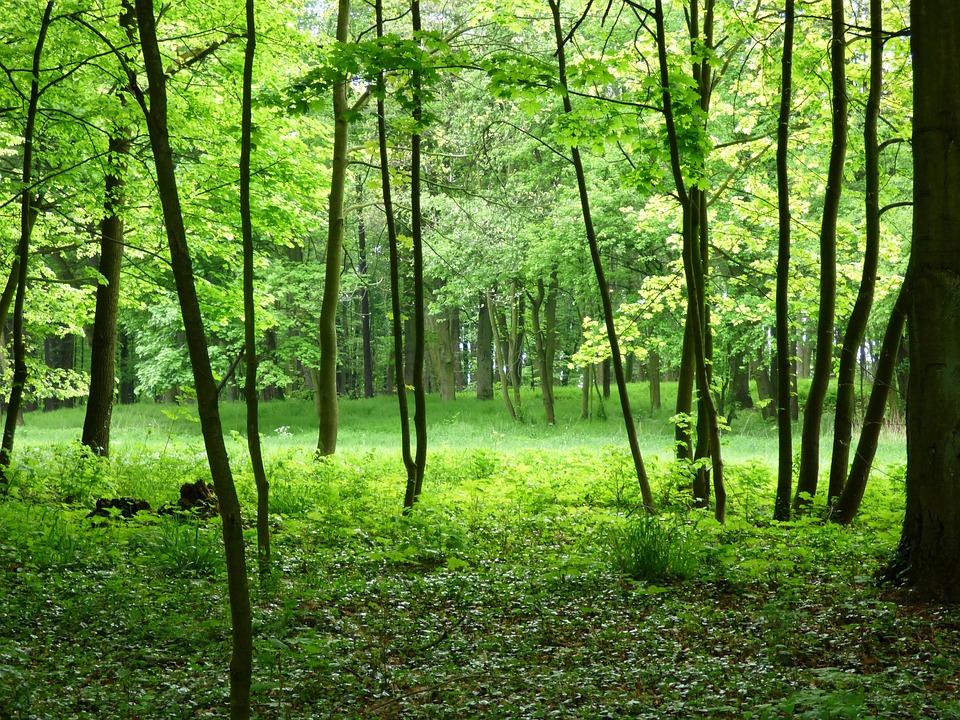 hutan pemandangan hijau foto gratis di pixabay