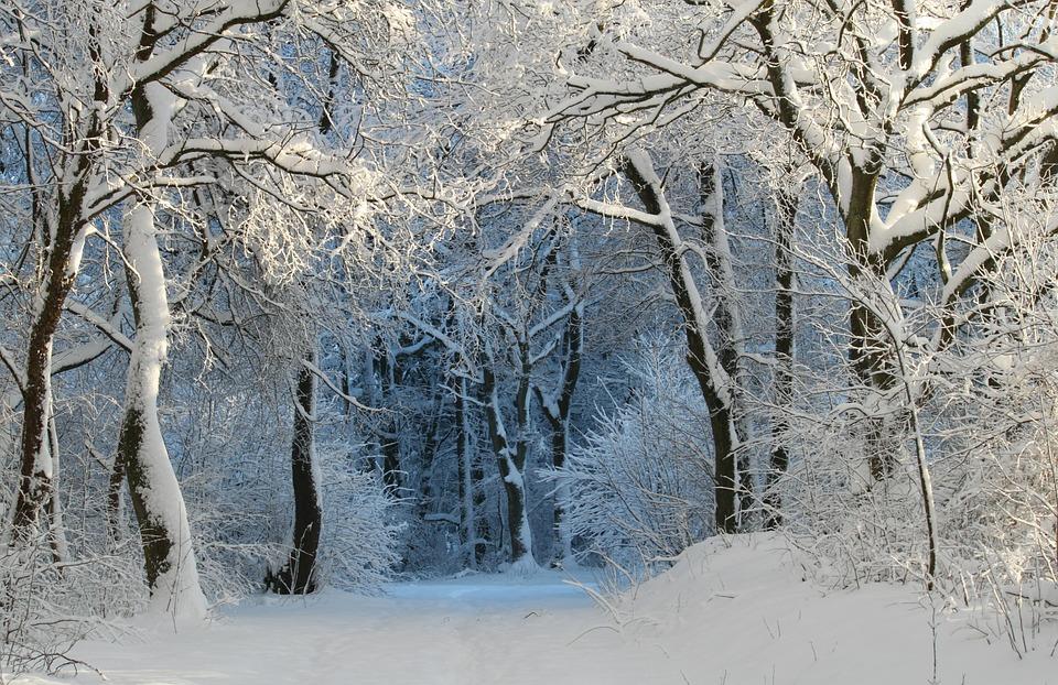 Forest (Winter) – Pixabay – Cocoparisienne