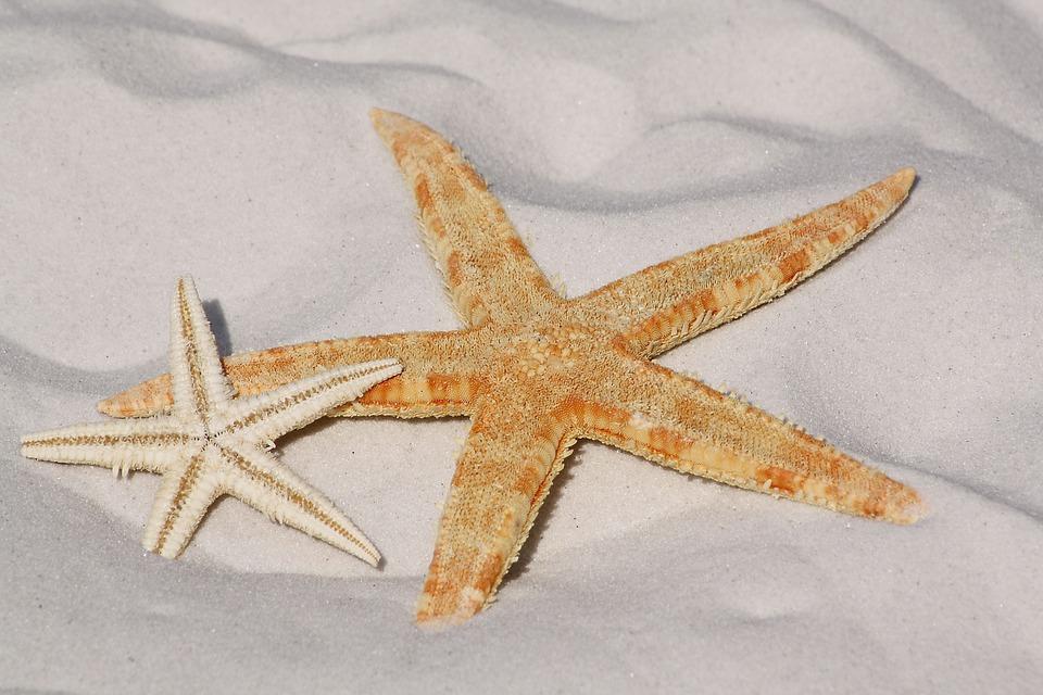 Estrella De Mar, Arena, Playa, Mar, El Agua, Lago