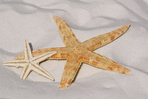 Starfish Images Pixabay Download Free Pictures