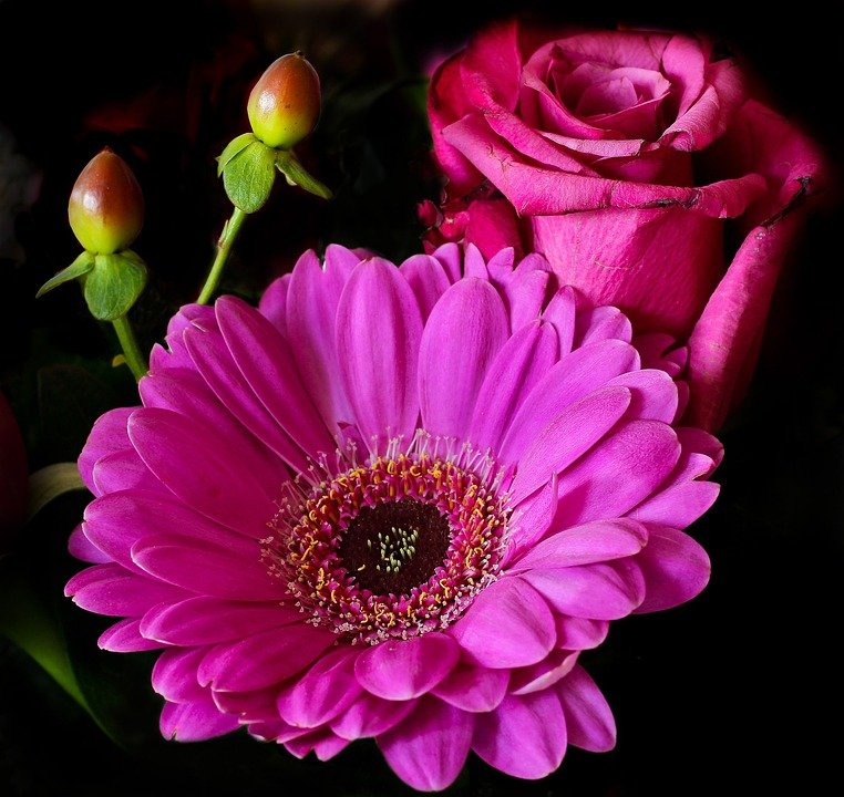 flower  free images on pixabay, Beautiful flower