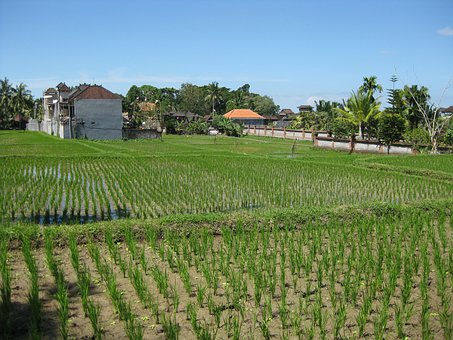 Agriculture, Farm, Fields, Seedlings