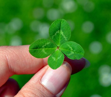 Klee, Four Leaf Clover, Green