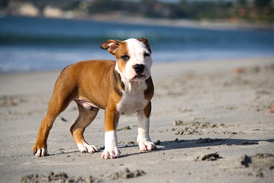 https://cdn.pixabay.com/photo/2014/05/16/00/17/puppy-345334_960_720.jpg