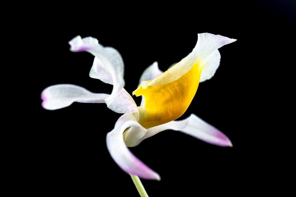 Wild Orchid Orchidea Kvetina - Fotografia zdarma na Pixabay 878b1dd5b29