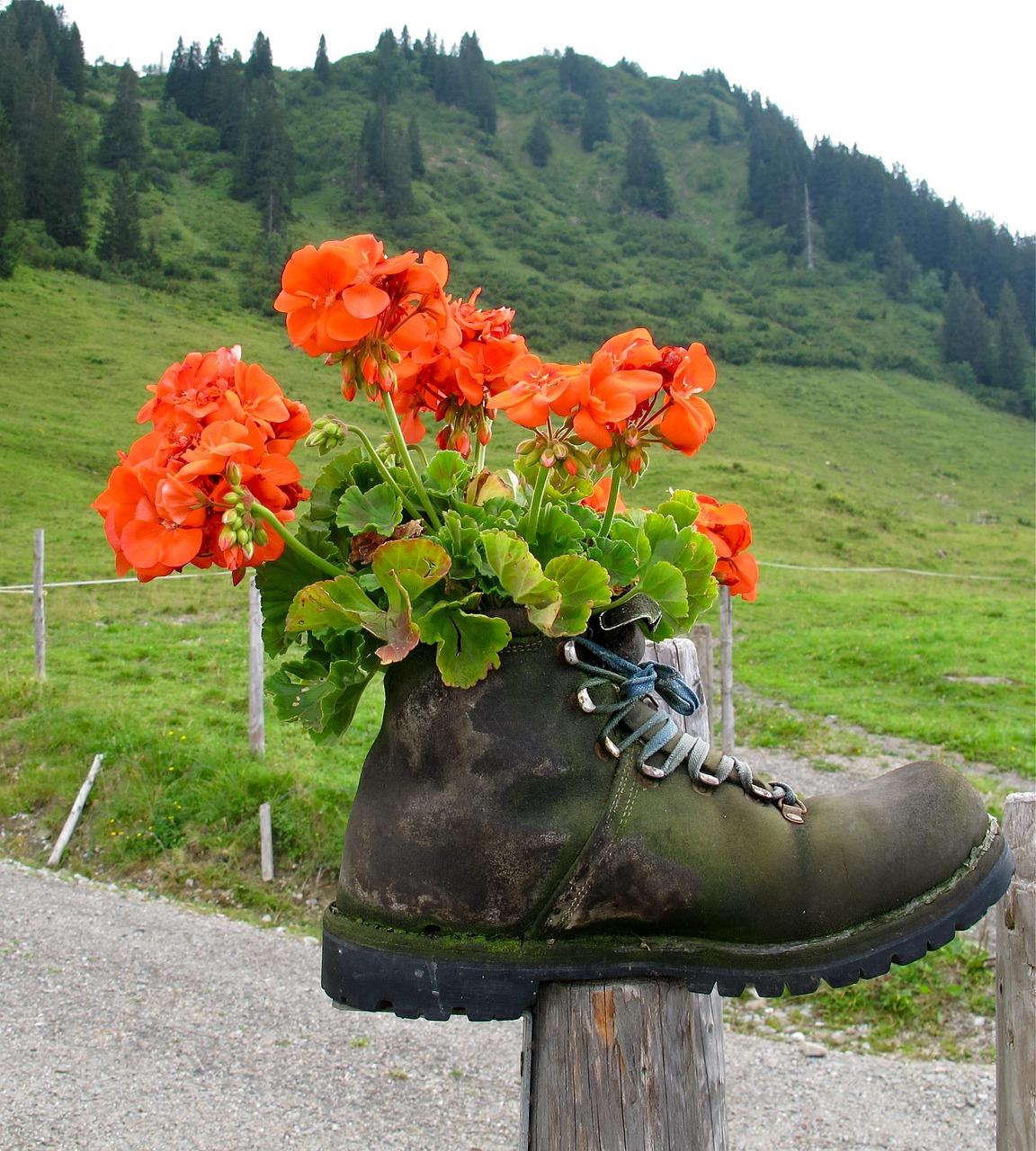 опыт цветок в ботинке фото выведено большое количество