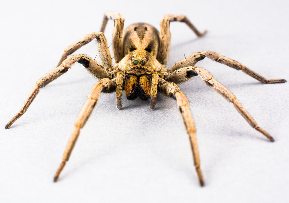 Free photo: Spider, Arachnid, Insect, Close - Free Image ...