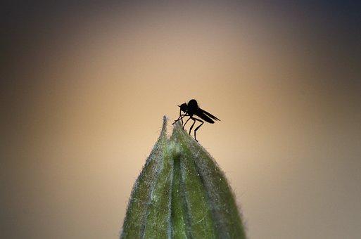 Μαύρο παχύ μουνί φωτογραφία