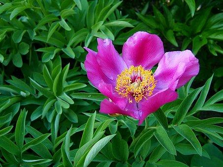 flower free images on pixabay