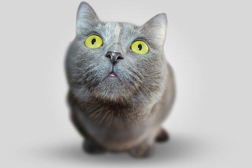 Cat, Animal, Eyes, Grey, View, Views