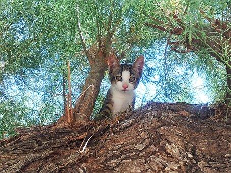 Katze, Kätzchen, Niedlich, Katzen, Baum