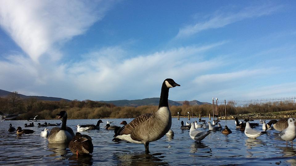 1920x1080 cabin lake ducks - photo #38