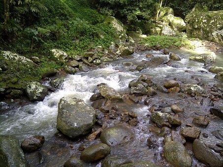 Stream, Creek, Flowing, Flow, Landscape