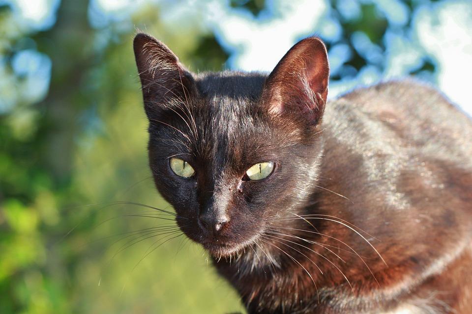Latina veľké prsia mačička