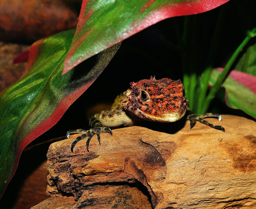 Lizard, Reptielen, Schaal, Terrarium, Urtier, Droge