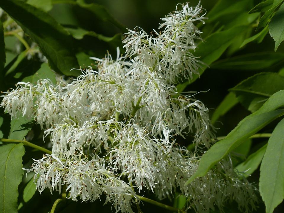 Free photo: Tree, Blossom, Bloom, White - Free Image on